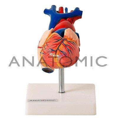 Modelo Coração Tamanho Natural Em 2 Partes TGD-0322