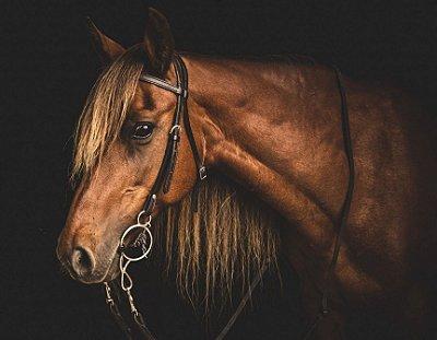 Quadro Decorativo Poster Cavalo