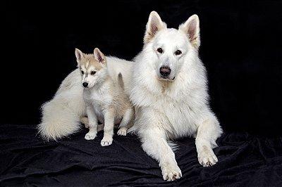 Quadro Decorativo Poster Cachorro e Filhote