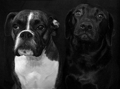 Quadro Decorativo Poster Cachorros Preto e Branco