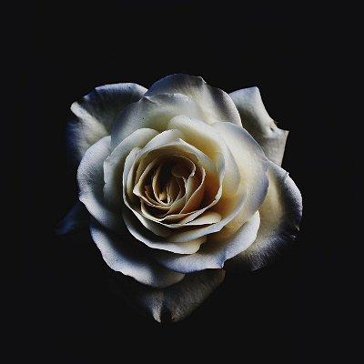 Quadro Decorativo Poster Rosa Branca