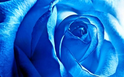 Quadro Decorativo Poster Rosa Azul