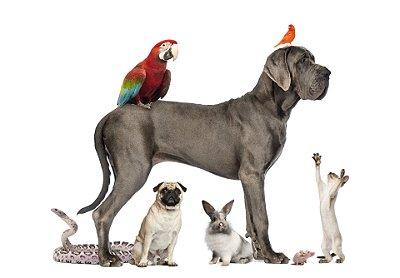 Quadro Decorativo Poster Animais Diversos