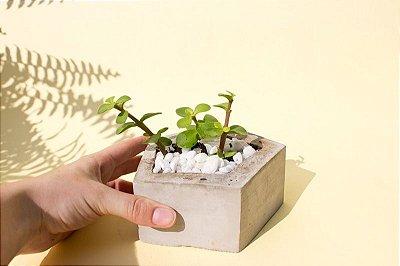 Pentágono - Vaso de cimento