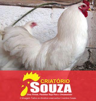 Ovos Galados Cornish Branca