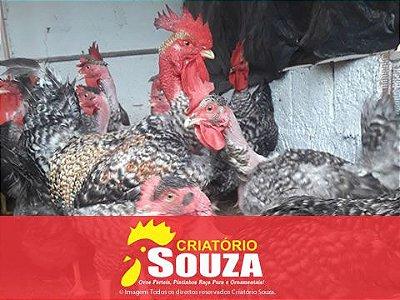 Ovos Galados Label Rouge Barrada Carijó Pedrez