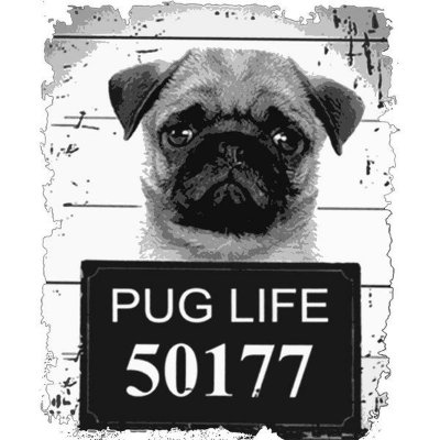 CAMISETA PUGLIFE