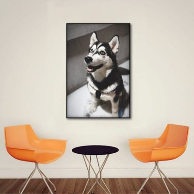 Quadro decorativo Dog Husky Siberiano