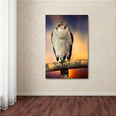Quadro A Águia Colorido Artístico Hawk