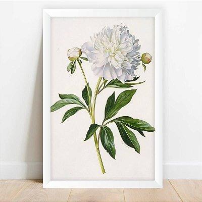 Quadro Coleção Flores Camélia Branca Decorativo