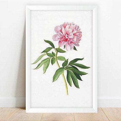 Quadro Coleção Flores Camélia Rosa Decorativo