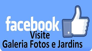 Facebook Albuns