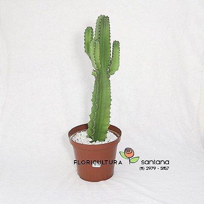 Cacto Mandacaru 85cm