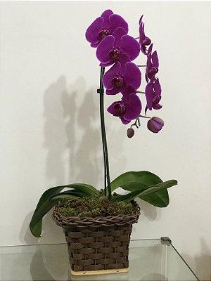 Orquídea Roxa