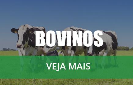 banner-bovinos