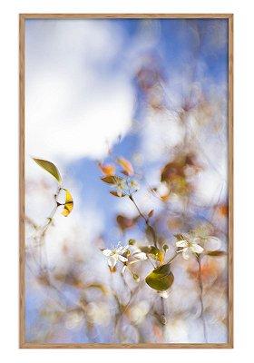 Primavera Suave