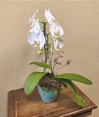 Assinatura floral de Orquídea