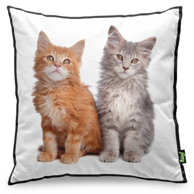Almofada Love Cats Black Edition - Maine Coon