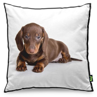 Almofada Love Dogs Black Edition - Dachshund Salsicha