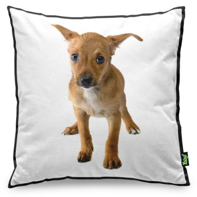Almofada Love Dogs Black Edition - Pinscher