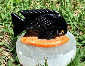Peixe preto em Pedra