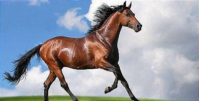 Dia: 11/05/2018 - 18h00 às 18h45 - SALA 04 - O cavalo com abdômen agudo. Quando indicar a hospitalização?