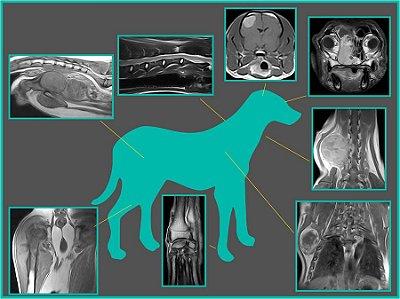 Dia: 12/05/2018 - 16h00 às 16h45 - SALA 05 - O papel do diagnóstico por imagem nas afecções do trato urinário dos felinos