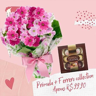 Primula com Ferrero Rocher Collection