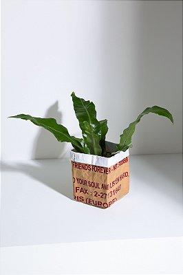 paper bag P