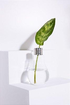 vaso lâmpada M