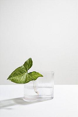 vaso de vidro meyer transparente P