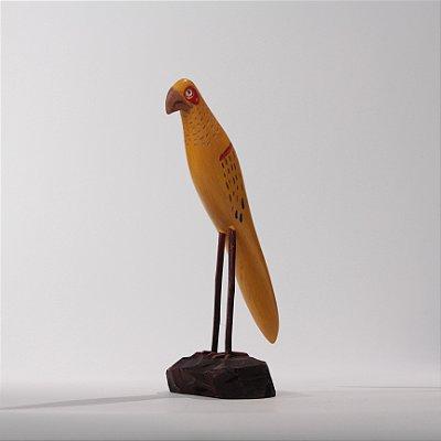 Arara Amarela com Detalhe