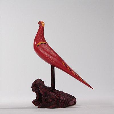 Arara Vermelha com Detalhe