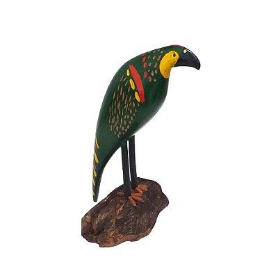 Papagaio do Bento de Sumé - PB