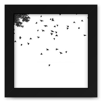 Quadro 20x20 Birds