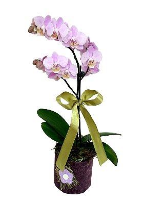 Orquídea média