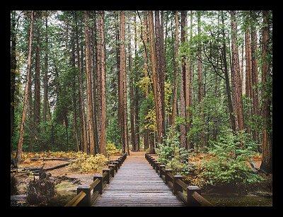 Quadro Decorativo Natureza Bosque