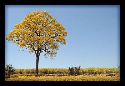 Quadro Decorativo Natureza Árvore