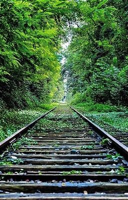 Fundo Fotografico - Linha de Trem (1,50 x 2,60 metros)