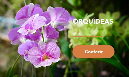 mini banner - Orquídeas