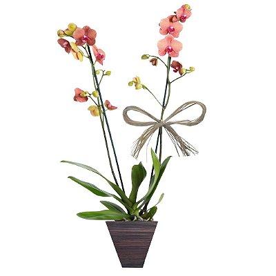 Orquídea Salmão com 02 Hástes no Vaso de Madeira