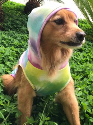 Camisa Tie Dye para Cachorro