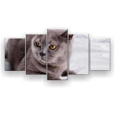 Quadro Decorativo Gato Chumbo 129x61 5pc Sala