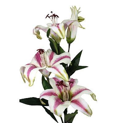 Flor Lírio do Campo