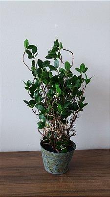 Vaso Metal Ficus