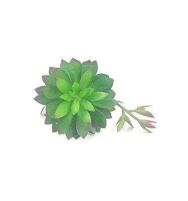 Suculenta Echeveria c/ Broto Brilliance