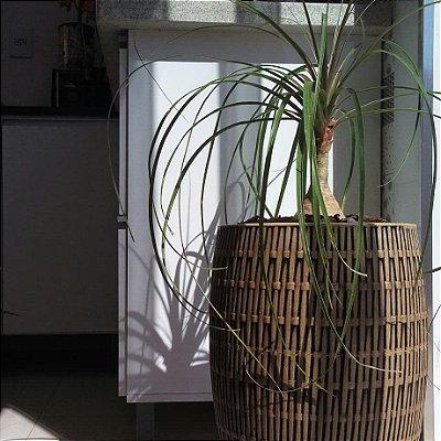 Vaso Bambu