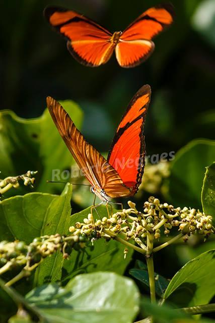 O prazer da fotografia de natureza por Roberto Negraes. Disponível na Maritaca Store.