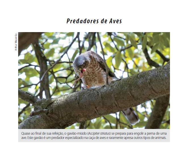 Livro Aves do Campus da UNICAMP, uma viagem pela história natural das aves. Disponível na Maritaca Store.