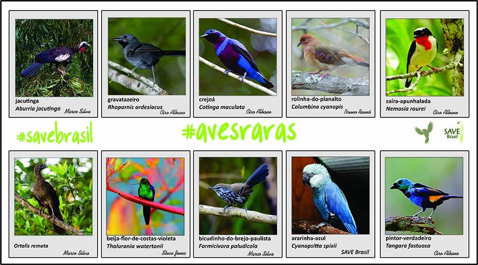 A série exclusiva de quadros #AvesRaras é uma parceria entre os artistas Denis R. Balduíno, Simone Alves Fraga e a empresa Maritaca Expeditions em prol da OnG SAVE Brasil